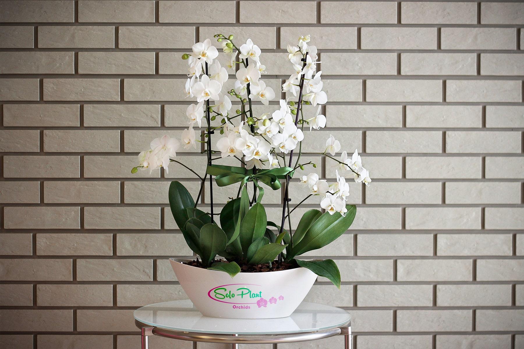 orkide doğal ortamı
